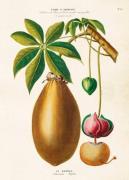 Plakat Baobab 50x70 cm